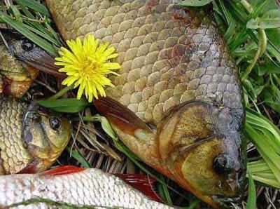 Осiння пiсня риболова