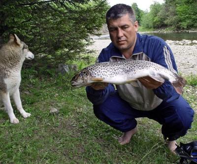 Форель: ловити заборонено знищувати